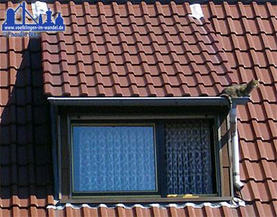 Katze vom Dach gerettet - Foto: Binz