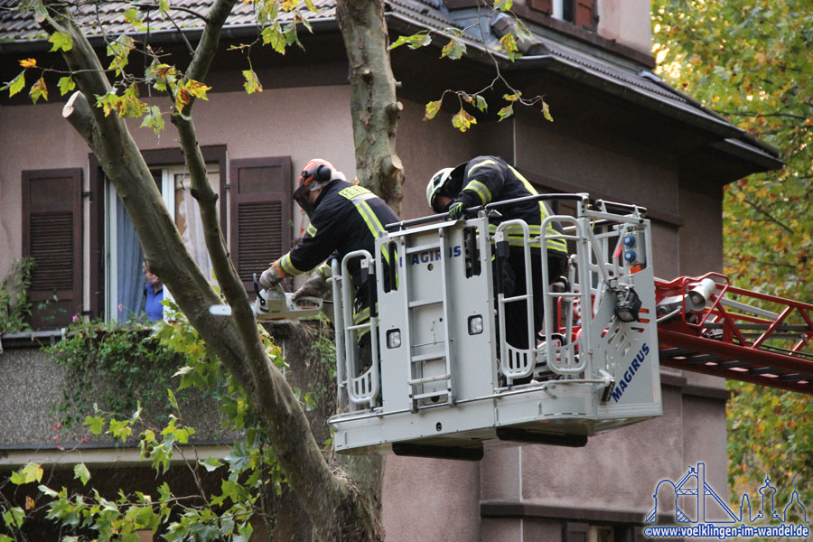 Ein Feuerwehrmann aus Völklingen entfernt einen absturzgefährdeten Ast (Foto: Hell)