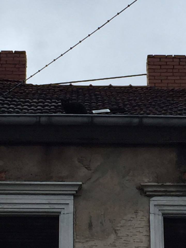 Leo auf dem Dach (Foto: Michael M.)