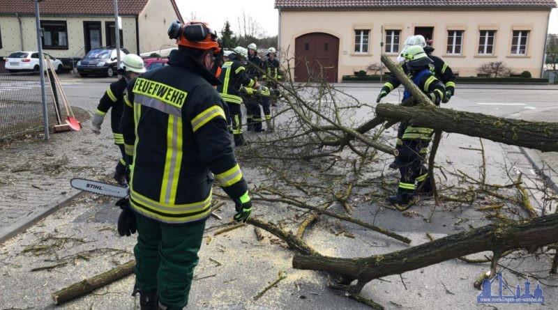 In Luisenthal musste die Feuerwehr die Reste eines umgestüzten Baumes räumen (Foto: Avenia)