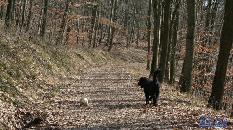 Wald, Wandern, Wanderwege, Hund, Spaziergang