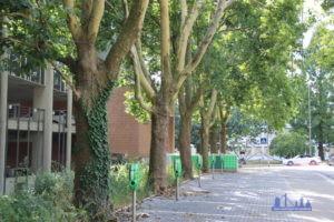 Die Bäume säumen fast die gesamte Stadionstraße