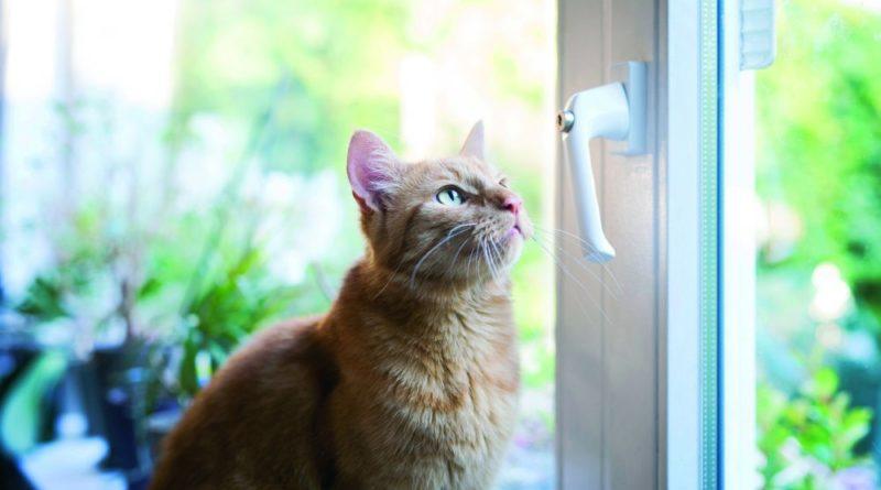 Unterschätzte Gefahr für Katzen: Gekippte Fenster. Bildnachweis: TASSO e.V.