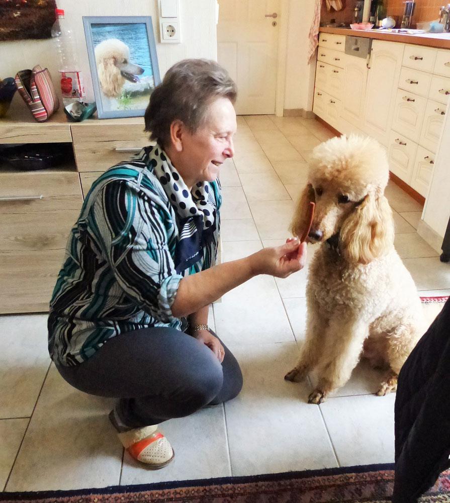 Ferien im Wohnzimmer mit dem Königspudel (Foto: Pflegeherzen)