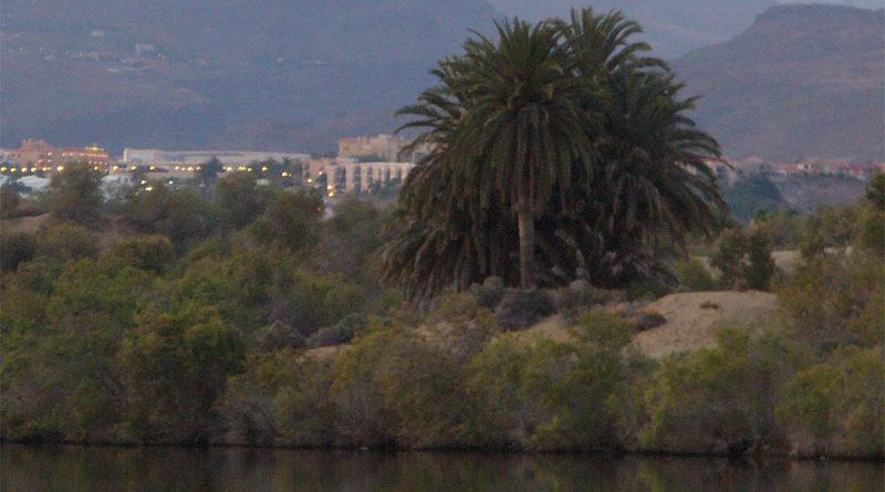 Gran Canaria (Foto: Eltz)