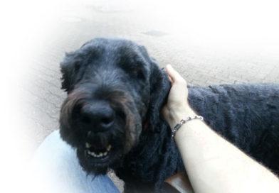 Hund (Symbolfoto)