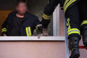 Die Feuerwehr konnte das Kätzchen befreien (Foto: Hell)