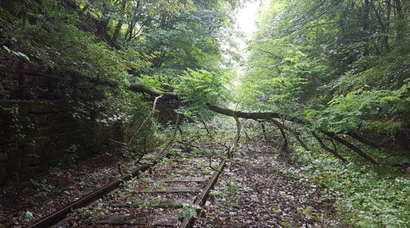 Die Natur holt sich die Strecke langsam zurück (Foto 2017: Hell)